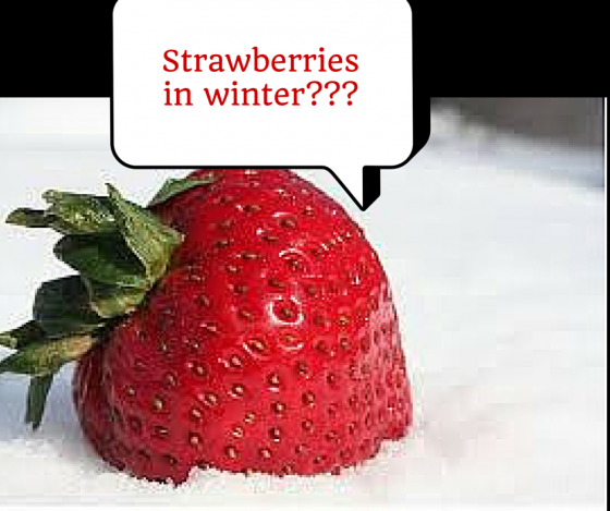 Strawberries in winter---