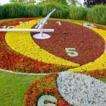 flower clock3